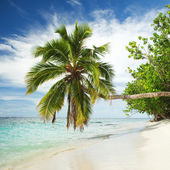 Tropical beach with palm tree — Stockfoto