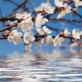 Bellezza di primavera — Foto Stock