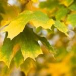 Autumn forest — Stock Photo #9869331