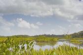 Beautiful lake in French Guiana — Stock Photo