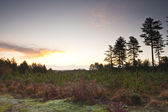 Beautiful New Forest at dawn — Photo
