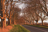 Beech avenue at Kingston Lacy — Photo