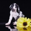 Puppy with flowers — Stock Photo