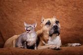 Cat & dog — Stockfoto