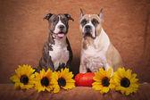 Cani d'autunnali — Foto Stock