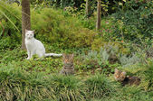Cats on the nature — 图库照片