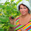 Stock Photo: Woman in greenhouse