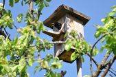 Starling sits in the birdhouse — Stock Photo