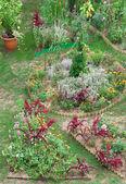 Bakgård trädgård — Stockfoto