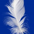 Feather Cut Out — Stock Photo