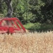 Oats Harvesting — Stock Video