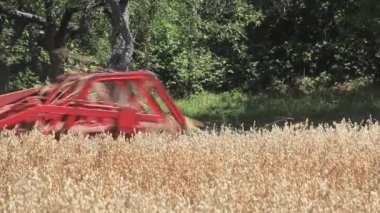 Oats Harvesting — Stock Video