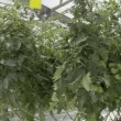 Stock Video: Inside the greenhouse