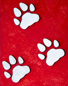 Paw prints on grunge background — Stock Photo