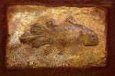 The Model fossil of ancient fish — Stock Photo