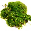 Closeup moss isolated on white background - 