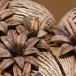 Stock Photo: Pinecone flower