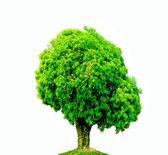 Der Baum — Stockfoto