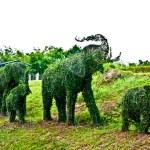 The Tree bend of elephants — Stock Photo