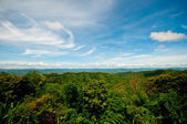 The Landscape of green forest — Stock Photo