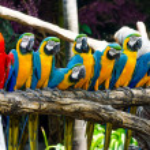 Beautiful of macaw — Stock Photo #25382737