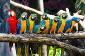 Beautiful of macaw — Stock Photo