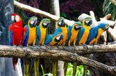 Beautiful of macaw — Stock Photo