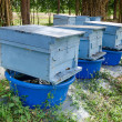Royalty-Free Stock Photo: Beehives farm