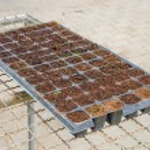 Seedlings vegetable in plastic tray — Stock Photo #26079219