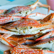 Closeup of steamed crab with spicy sauce — Stock Photo