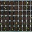 The Seedlings vegetable in plastic tray — Stock Photo #26594681