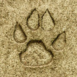 Animal foot print on floor ground — Stock Photo