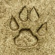 Stock Photo: Animal foot print on floor ground