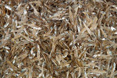 Dried fish in the market — Stock Photo