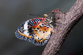 Colorful of butterfly — Stock Photo