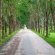 Road along rubber garden — Foto de Stock