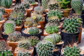 Group of cactus — Stock Photo