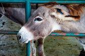 Молодые лошади в зоопарке — Стоковое фото