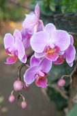 Fresh purple orchid — Stock Photo