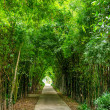 Bamboo tree tunnel background — Stock Photo