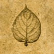 Imprint leaf on cement floor background — Stock Photo