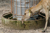 Feeder water for deer — Stock Photo