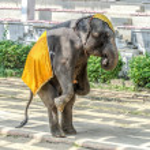 Young elephant standing on floor — Стоковое фото