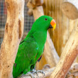 Beautiful of green parrot — Stock Photo