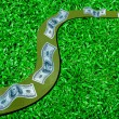 Road of money on green grass — Stock Photo