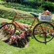 Old bicycle with flowers basket — Stock Photo
