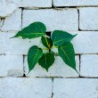 Green leaf on wall background — Stock Photo