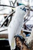 Beautiful of white macaw — Stock Photo