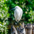 White egret bird — Stock Photo