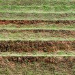 Layer of soil for agriculture — Stock Photo